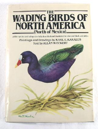 Image for The Wading Birds of North America (North of Mexico)